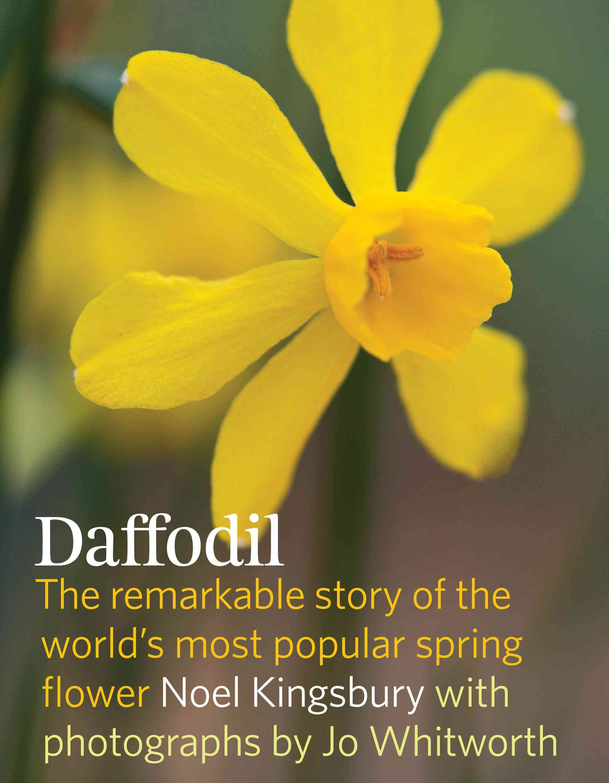 The Daffodil By Kingsbury, Noel/ Whitworth, Jo